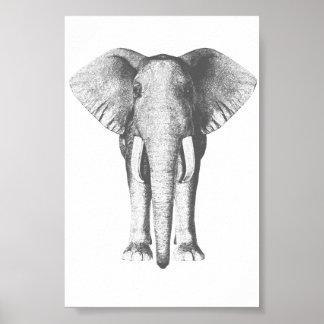Pôster Elefante em preto e branco