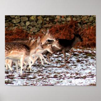 Pôster Em suas marcas (cervos)