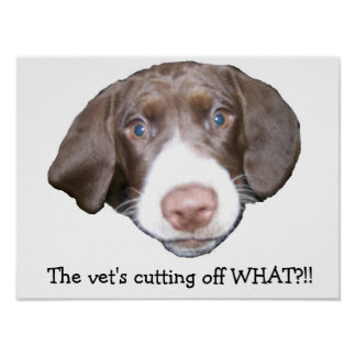 Poster engraçado do cão pôster