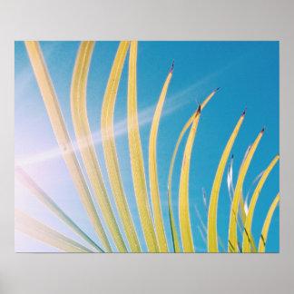 Poster ensolarado da folha da palmeira