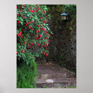 Pôster Entrada do hibiscus