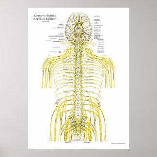 Poster espinal da anatomia da quiroterapia dos