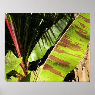 Pôster esplendor tropical