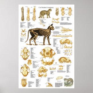 Poster esqueletal 24 x 36 da anatomia do crânio do
