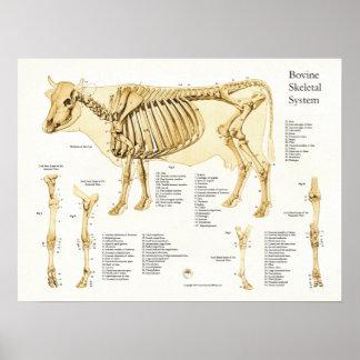 Poster esqueletal bovino da anatomia da vaca
