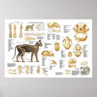 "Poster esqueletal felino 24"" da anatomia do gato X"