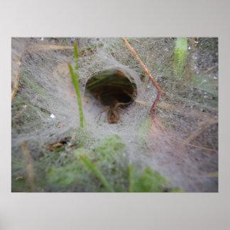 Poster europeu da aranha do fúnil em forma de teia