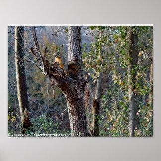 Poster exterior do esquilo dos animais selvagens