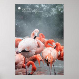Pôster Flamingos de Smithsonian | na neve