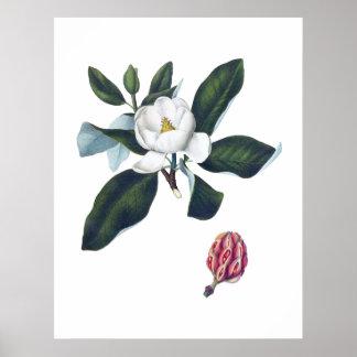 Pôster Flor branca Cusion da magnólia grande