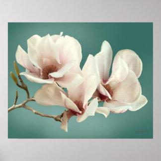 Pôster Flor da magnólia do primavera, rosa, cerceta macia