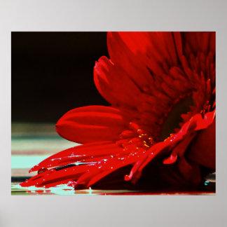Poster Flor vermelha do Gerbera da margarida