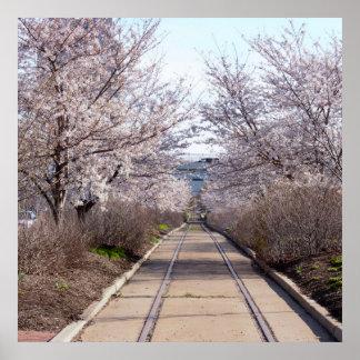 Pôster Flores de cerejeira e trilhas Philadelphfia