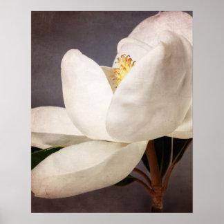Pôster Flores florais da flor branca da árvore da