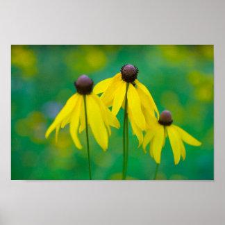 Poster Flores, madeiras Metropark de Blendon, Columbo,