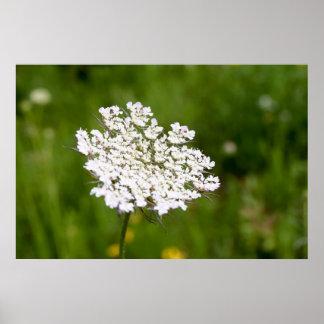 Pôster Flower whites