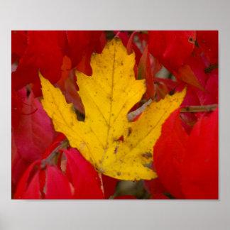 Pôster Folha caída do outono entre Bush ardente