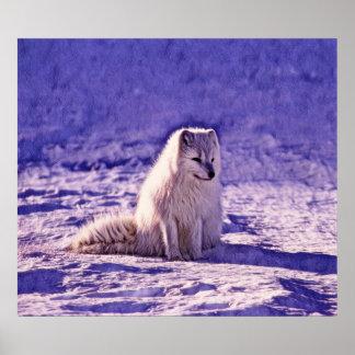 Poster Fox ártico