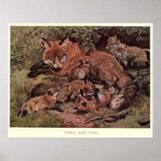 Pôster Fox do vintage e Cuba Pintura (1909)