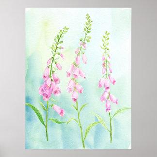 Poster Foxgloves cor-de-rosa da aguarela