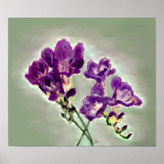 Poster Freesia violeta
