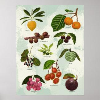 Poster Frutas tropicais filipinas exóticas pintados à mão