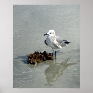 Pôster Gaivota na praia com alga
