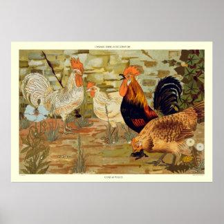Pôster Galos e galinhas