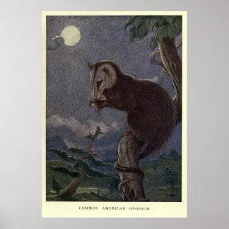 Poster Gambá Pintura do vintage (1909)