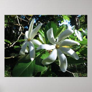 Pôster Gardenia de Tahitian