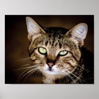 Pôster Gato de gato malhado