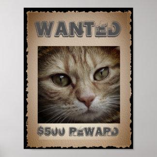 Poster Gato engraçado querido