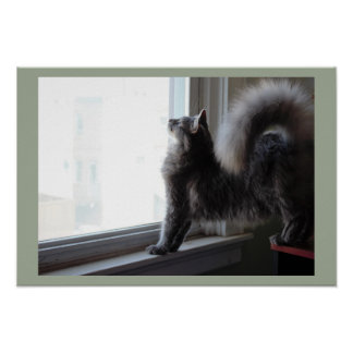 Poster Gato que olha para fora a janela