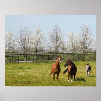 Pôster Horseplay: Dois cavalos e um asno no primavera