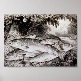 Pôster Imagem do vintage da pesca da truta