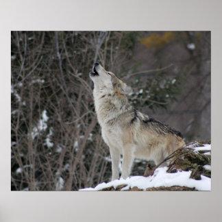 Poster Lobo do urro no inverno