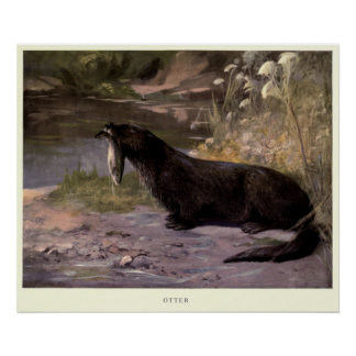Pôster Lontra Pintura do vintage (1909)