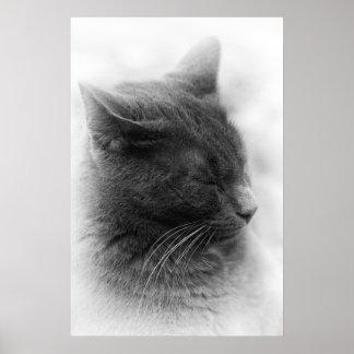 Pôster Manche o gato imperioso cinzento magnífico