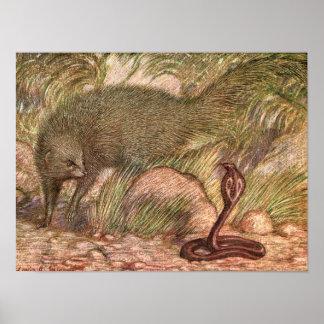 Pôster Mangusto e cobra por Sargent, animal selvagem do