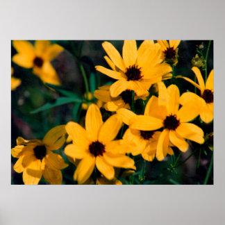 Pôster Margaridas amarelas