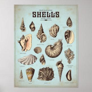 Poster marinho com vários escudos do mar