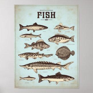 Poster marinho retro com tipos diferentes de