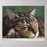 Poster minúsculo do rato do sono do gato de gato m