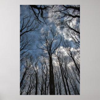 Poster nebuloso do céu azul de árvores de álamo da