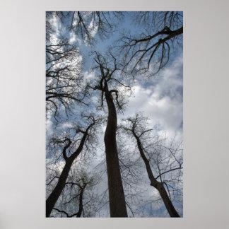 Poster nebuloso dramático do céu azul de árvores