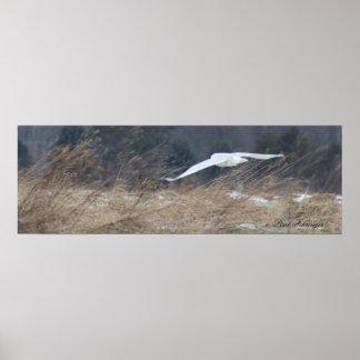 Poster nevado da coruja