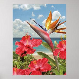 """Poster no paraíso de Alan Giana """"hibiscus"""""""