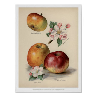 Pôster O vintage frutifica ilustração - Apple