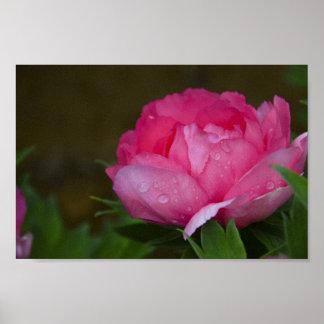 Poster Parque floral das videiras das flores das flores