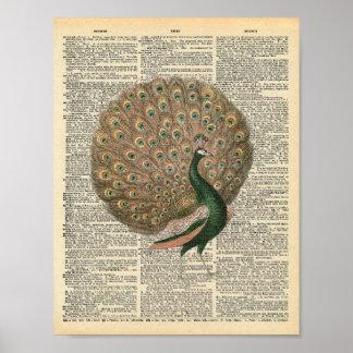 Poster Pássaro bonito do pavão da arte do dicionário do